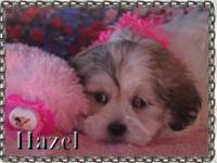 Hazel is a sweet little girl charming as a button.