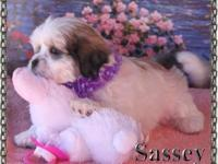 Sassey is a beatiful little lady cute as a button.