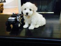 I have these cute little Maltipoo puppies which are