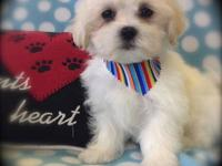 We have an adorable Female Maltipoo available for her