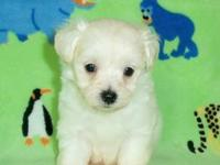 We have 2 precious Maltipoo male puppies. Mom is a