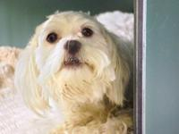 Taco is around 8 years old. He is a neutered, male,