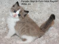1 male, 4 females- Moonrise Ragdolls is now accepting