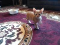 I have two friendly and cute Orange Kittens looking for