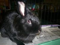 I have a pair of lionhead rabbits for sale that are