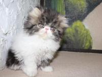 We have Beautiful, sweet, loving very playful kittens