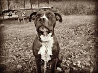 Cranberry is a 2 year old Pit mix available for