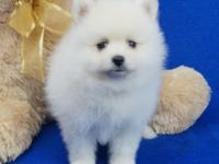 adorable Pomeranian puppies for sale For more