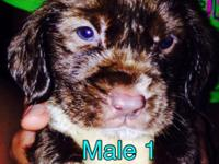 I have 3 male and 2 female puppies, the mother is a