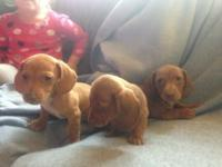 I have 6 puppies left (from a little of 8) all ready to