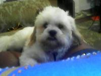 I am selling my shih Tzu puppy named Kobi because my