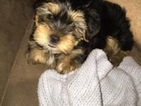 I have 2 CUTE AKC yorkie puppies ready to go to a good,