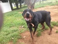We have four beautiful rotties who need a good home. We