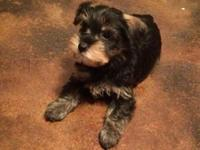Sweet and affectionate little puppy. He is utd on