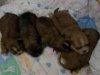 sweet & very smart babies. we have 4 males left. even