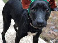 ADORABLE, SWEET BOY PETE's story Hi! My name is Pete! I