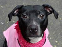 Pebbles is located at Manhattan Animal Care and