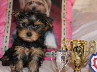 Adorable yorkie puppies for adoption .they are house