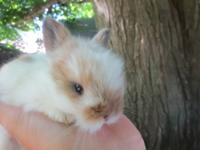 We have 8 baby bunnies! They are super friendly, when