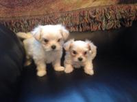 I have 2 adorable and really small female Maltese