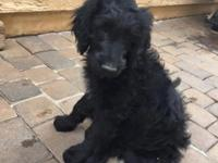 I only have two available for adoption - one male and