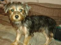 We have on female Yorkie ready for new home. Very sweet
