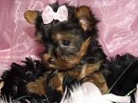 We have two adorable tiny yorkie females. They are full