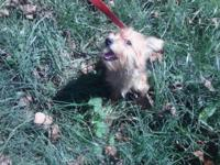 Very sweet little yorkie, about 5 pounds. House and