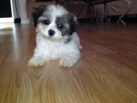 Adorable fluffy puppy healthy Playful and ready for a