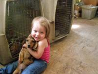 I have 6 Beautiful puppies, 4 Males and 2 Females. The