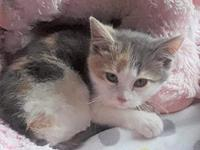 My story Adorra is very shy. She needs a quiet home