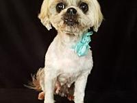 My story Meet Adrie, this 12lb Shih Tzu is about 9