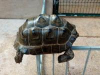 We have 15/21 Inches Adult Male and Female Aldabra