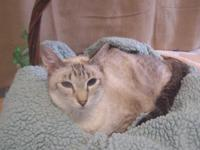 We have several CFA Classic Siamese Adult cats that we