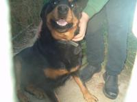 I have a full grown female German Rottweiler to rehome.