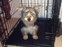I need to find a new home for my Female yorkie named