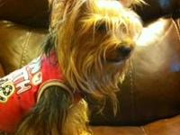 I have a very sweet adult female yorkie to re home. She