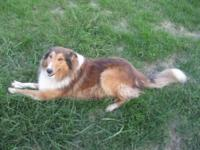 Man collie, Born on March 22, 2009. Great with other