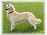 Birth date 4/18/2012. He is a very handsome dog with a