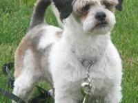 3 adult neutered male shih tzus. Liver male 7 yrs.