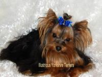 I have a beautiful 6 yr old 5 lb Yorkie for adoption.