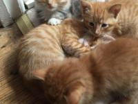 I have four very friendly 7 week old kittens available