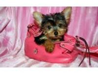 We have BEAUTIFUL Yorkshire terrier puppies for