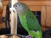 Hi I have a sweet African Brown Head Parrot boy Im