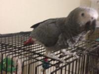 Gasper is a 10 month old Congo African Grey he's very