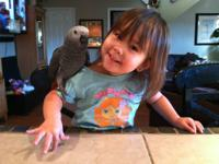 I have a baby african grey. Born august 6th 2013 almost