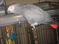 African grey, very entertaining. Says many words and