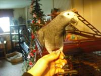 I have a 3 yr old Healthy African Grey Timneh named