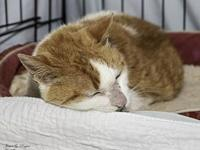 Agatha's story Agatha is a sweet 12 yr old cat who has