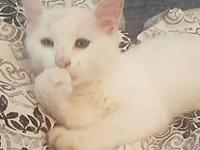 Aimee's story Meet Aimee. Aimee is a Turkish Angora mix
